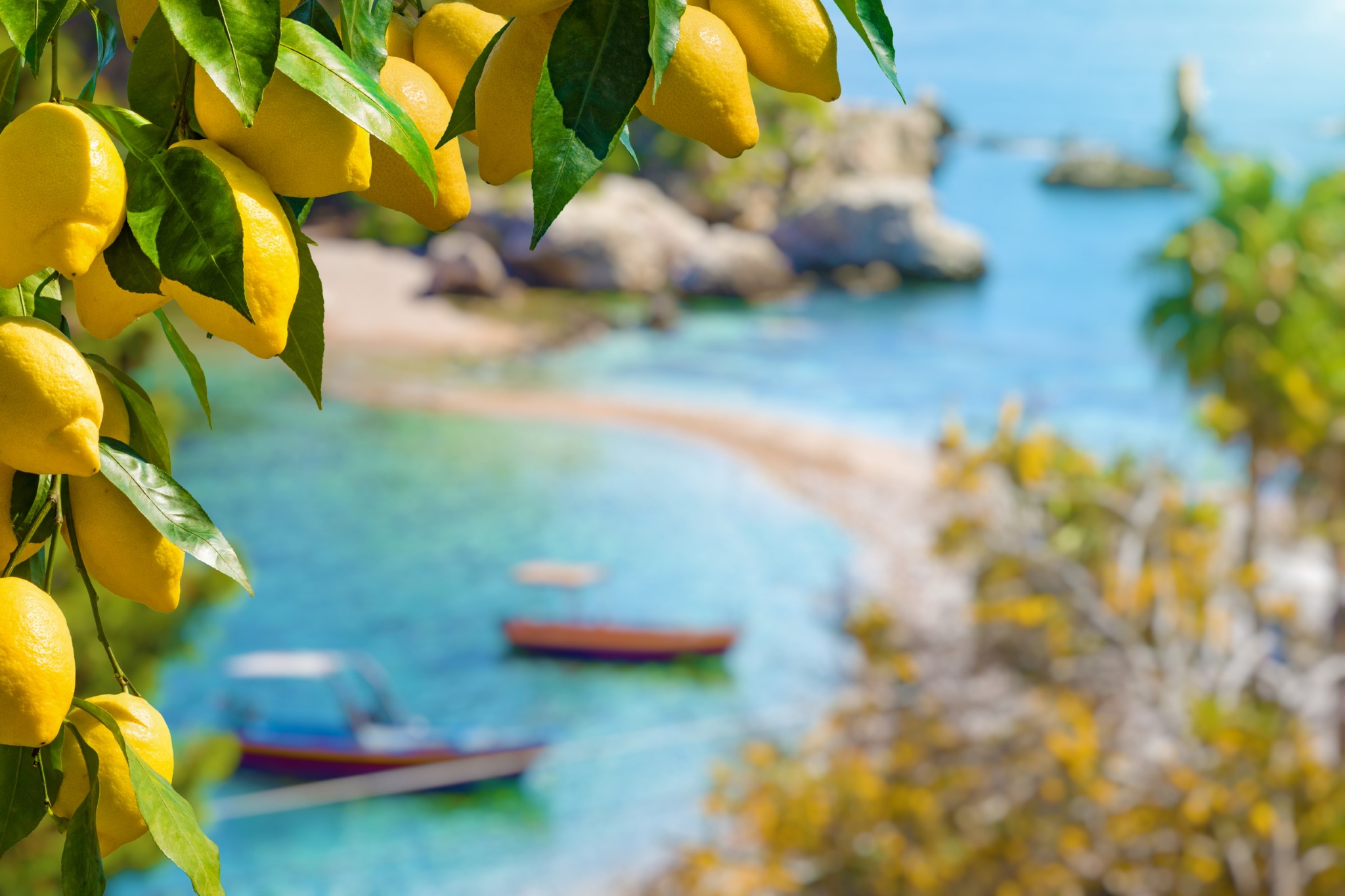 Bunches of fresh yellow ripe lemons with green leaves. Narrow path connects island to mainland Taormina beach in azure waters of Ionian Sea, Sicily, Italy.
