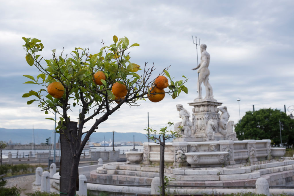 Messina, Italy - May 29 2019:  an orange tree with blurred in the background the fountain of neptune, work of the artist giovanni angelo montorsoli.