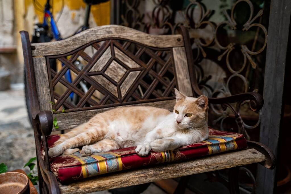 Cat laying in a chair outside of a restaurant in Palermo, Italy