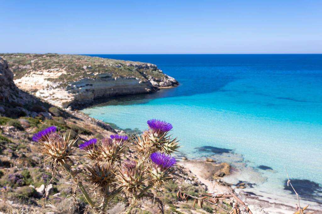 """Lampedusa Island Sicily - Rabbit Beach and Rabbit Island Lampedusa """"Spiaggia dei Conigli"""" with turquoise water and white sand at paradise beach. Mediterranean scrub with thyme and cardoon. Tabaccara"""